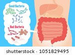 good and bad bacteria. enteric... | Shutterstock .eps vector #1051829495