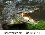 Australian Crocodile.