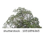 isolated tree on white... | Shutterstock . vector #1051896365