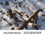 Snow Covered Soil Ground Of...