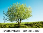 spring tree with flowers...   Shutterstock . vector #1052010509