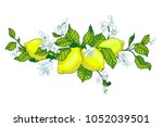 lemon tree in tattoo style... | Shutterstock .eps vector #1052039501