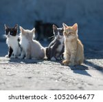 Stock photo homeless animals group homeless kittens on concrete pier in sea port 1052064677