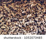luwak coffee beans in fresh | Shutterstock . vector #1052073485