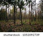 trail 's walkway in the... | Shutterstock . vector #1052092739