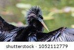 anhinga portrait  anhinga... | Shutterstock . vector #1052112779