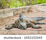 marine iguana on santiago... | Shutterstock . vector #1052153345