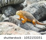 marine iguana on santiago... | Shutterstock . vector #1052153351