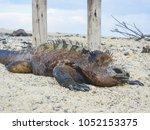 marine iguana on santiago... | Shutterstock . vector #1052153375