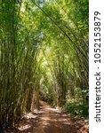 path through dense bamboo... | Shutterstock . vector #1052153879