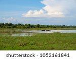 photos of the minneriya... | Shutterstock . vector #1052161841