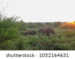 image of the elephants of the... | Shutterstock . vector #1052164631