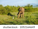 image of the elephants of the... | Shutterstock . vector #1052164649