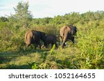 image of the elephants of the... | Shutterstock . vector #1052164655