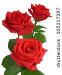 Stock photo three red roses isolated on white 105217397