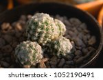 small cactus with sunset | Shutterstock . vector #1052190491