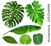 Tropical Jungle Leaves Collection Monstera - Fine Art prints