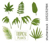 tropical leaves set. colorful | Shutterstock . vector #1052252984