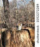 Small photo of Cute American red squirrel in New York Central Park