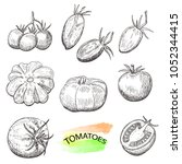 hand drawn tomatoes set... | Shutterstock .eps vector #1052344415