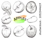 hand drawn apples set isolated... | Shutterstock .eps vector #1052344619