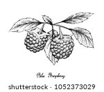 berry fruits  illustration of... | Shutterstock .eps vector #1052373029