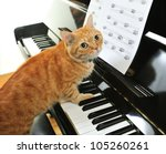 Stock photo a yellow cute cat playing the piano 105260261