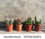 mix mini pots of succulent and... | Shutterstock . vector #1052620601