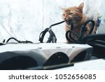 ginger cat tries to bite the... | Shutterstock . vector #1052656085