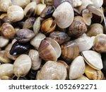 sea shell on shelf in market  | Shutterstock . vector #1052692271