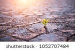 green plant sprout in desert | Shutterstock . vector #1052707484