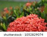 beautiful romantic blossom... | Shutterstock . vector #1052829074