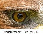 Detail  Right Eye Golden Eagle