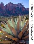agave plant desert flora... | Shutterstock . vector #1052925821