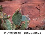 prickly pear cactus spiny... | Shutterstock . vector #1052928521