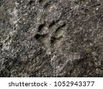 imprint of a dog paw in cement | Shutterstock . vector #1052943377