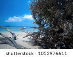 Dried Tree On The Beach Of...