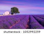 violet  lavender bushes...   Shutterstock . vector #1052992259