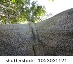 sama ma tree   ceiba pentandra ... | Shutterstock . vector #1053031121