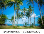 Panoramic View Tropical Beach Coconut - Fine Art prints