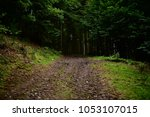 Trees And Dirt Path Through Th...