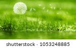 dandelion blows the wind | Shutterstock . vector #1053248885