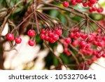 fresh fruit on jeju island ... | Shutterstock . vector #1053270641