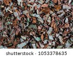 Wooden Bark Scattered On The...
