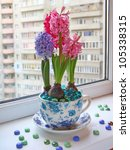 Composition from flowerings hyacinths in a beautiful pot on a window - stock photo