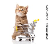 Stock photo british cat with shopping cart isolated on white kitten osolated 105340091