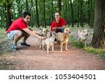 Stock photo dog walkers with dogs enjoying in walk 1053404501