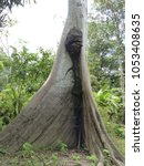 samauma tree  ceiba pentandra ... | Shutterstock . vector #1053408635