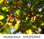 delicate dainty fragrant white... | Shutterstock . vector #1053524045