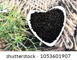 Black Cumin  Nigella Sativa Or...